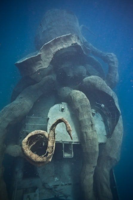 #Environment: Giant octopus and historic ship combine to create new coral ecosystem