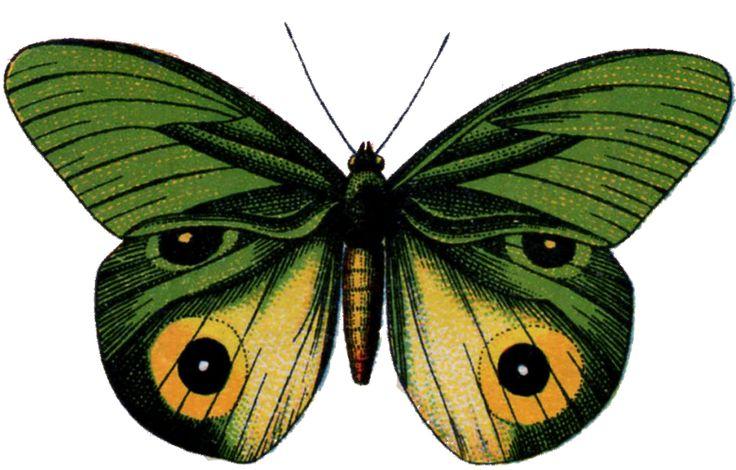 Vintage Butterfly ~ Zibi Vintage Scrap