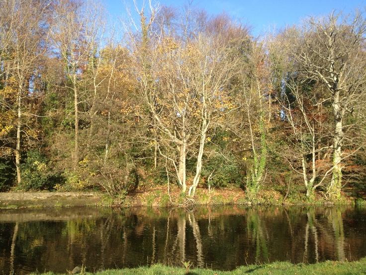 Forest walk :-) Www.alifeoffreedom.com