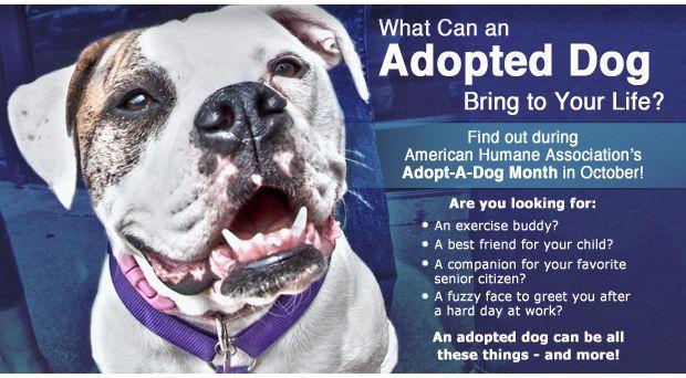 Adopt Small Dog Quebec
