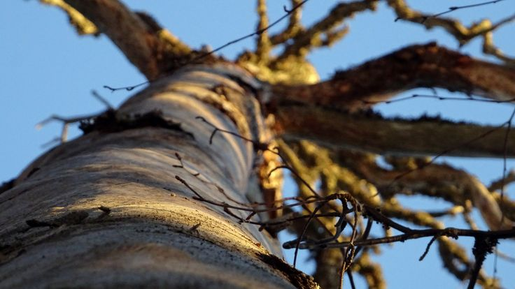 Dead tree close-up.