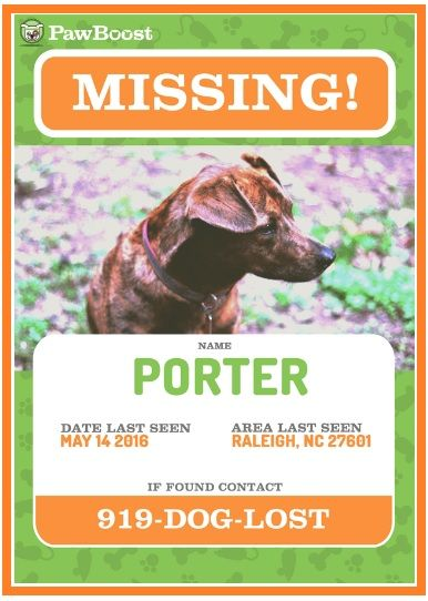 10+ Missing/Lost Pet Poster Templates Word, Excel  PDF Templates