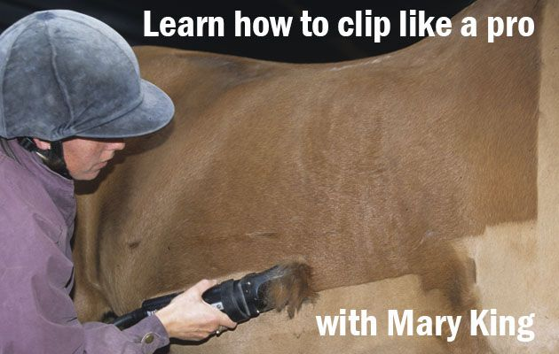 If your horse looks like a patchwork quilt after you've been busy with the clippers, learn how the pros do it with our video masterclass featuring Mary King and her former groom Jodie Summers clipping out Kings Temptress. Watch the video now at http://www.horseandhound.co.uk/features/how-to-clip-a-horse-video-masterclass/#vlkddfipyvyrvMQR.99