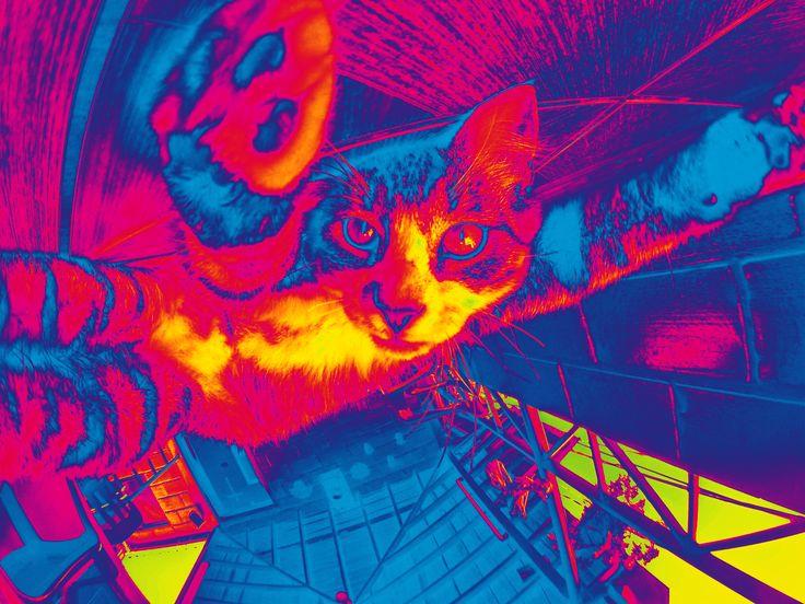 Peyote the Cat