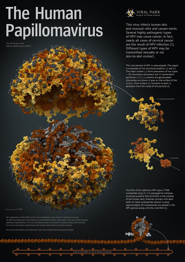 Electron microscopy Virus images: viruses, bacteriophage, bird flu, Listeria, HIV, herpes, influenza, polio, hepatitis, rhinovirus, small pox, rotavirus 1