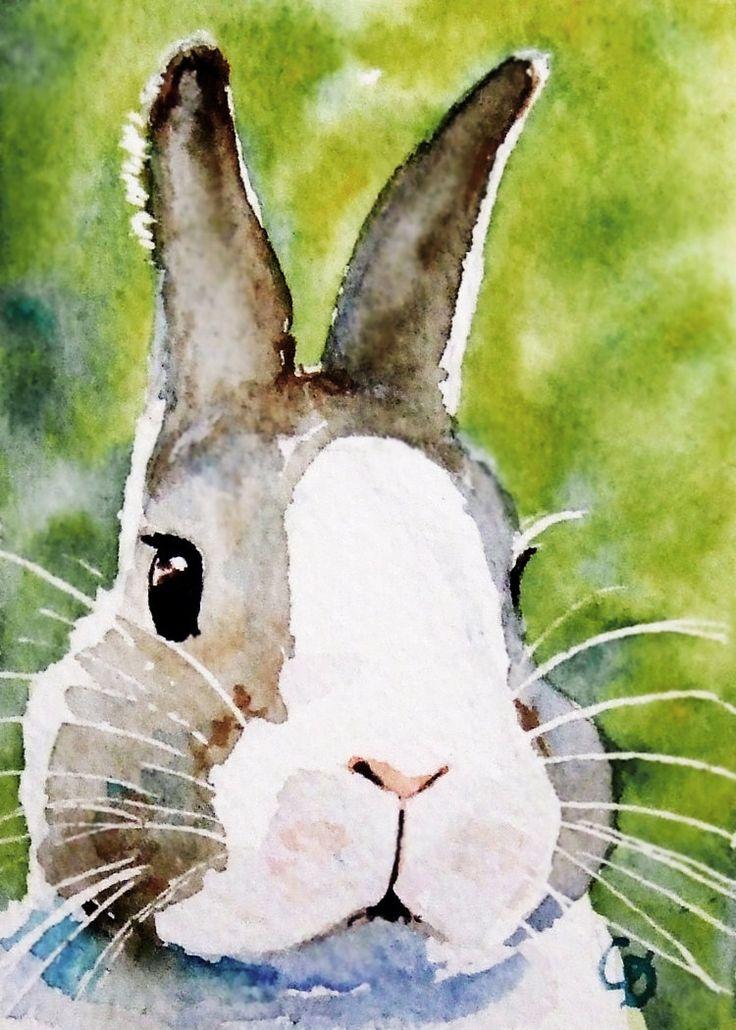 208 best Animals — Rabbit images on Pinterest