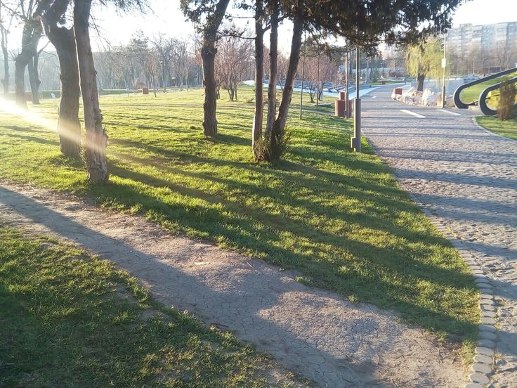 A sunshine in our park