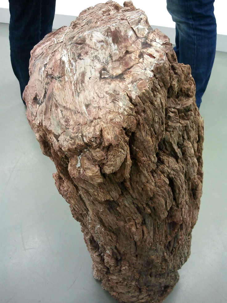 Simple fossiles versteinertes Holz Madagaskar