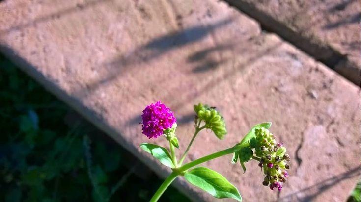 Fabrica de ladrillos   #goodvibes #exploring #flowerstagram #flowerloves #florescarnal #spiringday #natureloversmx #nature #colorful #jj_forum #jj_indetail #photonature #beginnersmx #beginnersverdes #landscapelovers #nature_shooters #inspiring_shot #vsco #vscoloversmx #views #road #trip #naturalezaviva #view #skyabstract #postalmx_calles #landscaper #landscapelovers #postalmx_paisajes #travel #travelgram