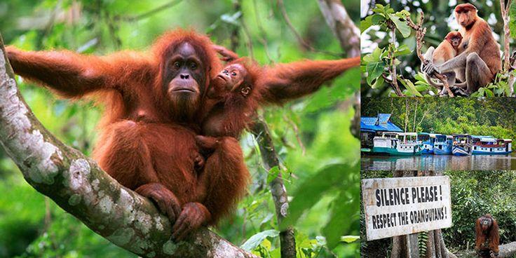 Tanjung Puting National Park Kalimantan | Indonesia Travel