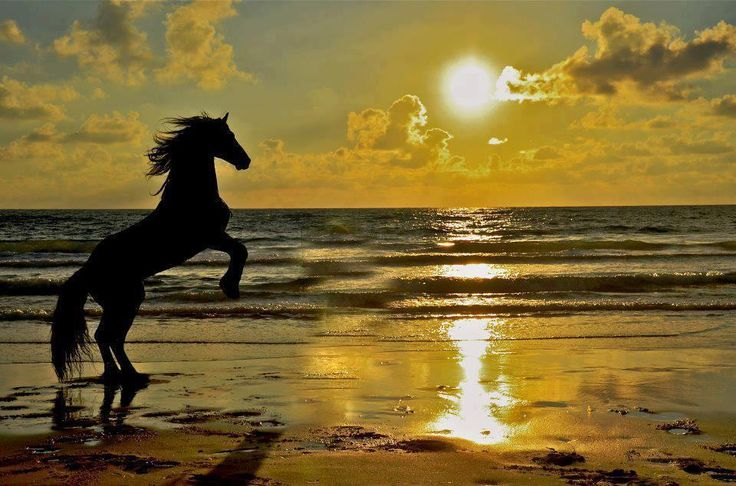 Beautiful Rearing Horse at Sunset | Art and Tattoo Ideas ...