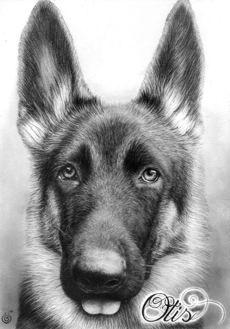 German Shepherd Portrait by Yankeestyle94 on DeviantArt