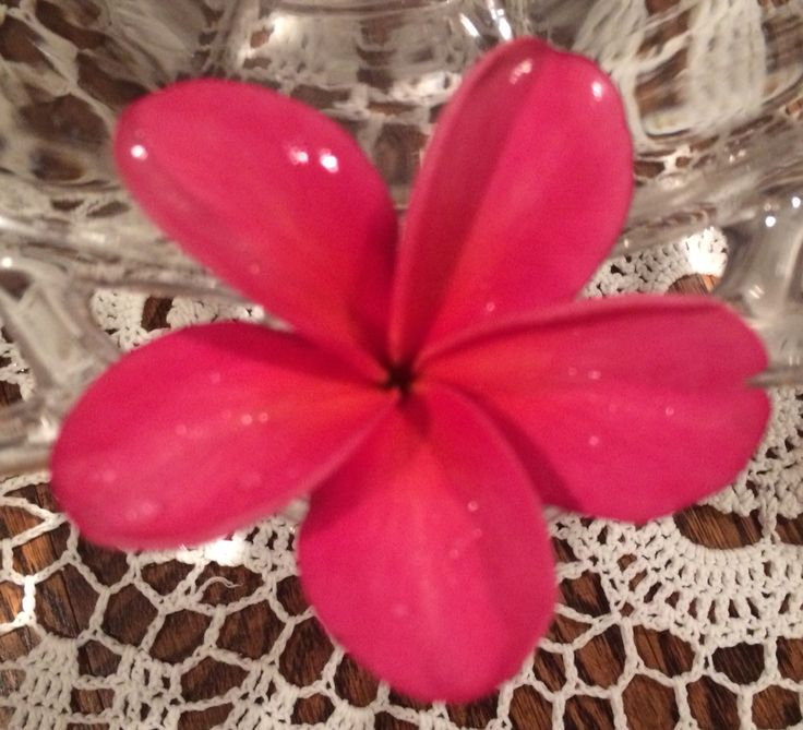 Our first plumeria bloom of 2015