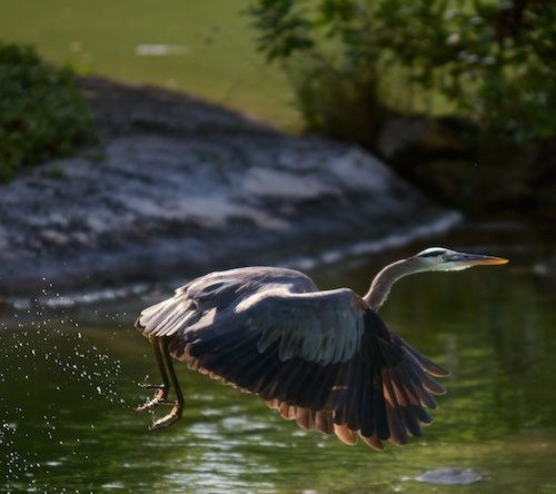 If you could fly anywhere right now where would you go? #MayakobaLife #Nature #Birding #beautiful #BirdWatching