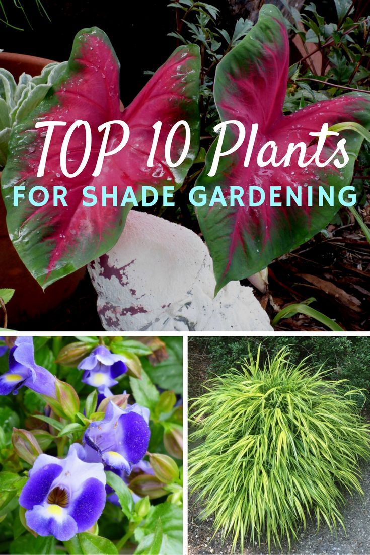 By Mary H. Dyer, Master Naturalist and Master Gardener, summitspringsgardenwriting.com Shade gardening can pose a challenge to those just starting out. But just because your landscape has a bit of shade doesn't mean you can't fill the space with beautifulRead this artice
