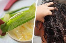 5 лучших натуральных кондиционеров для волос - Шаг к Здоровью