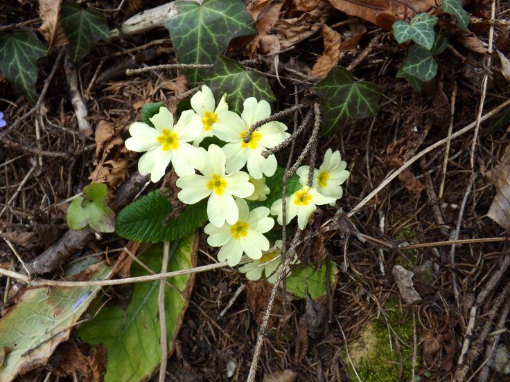 fiori, bosco
