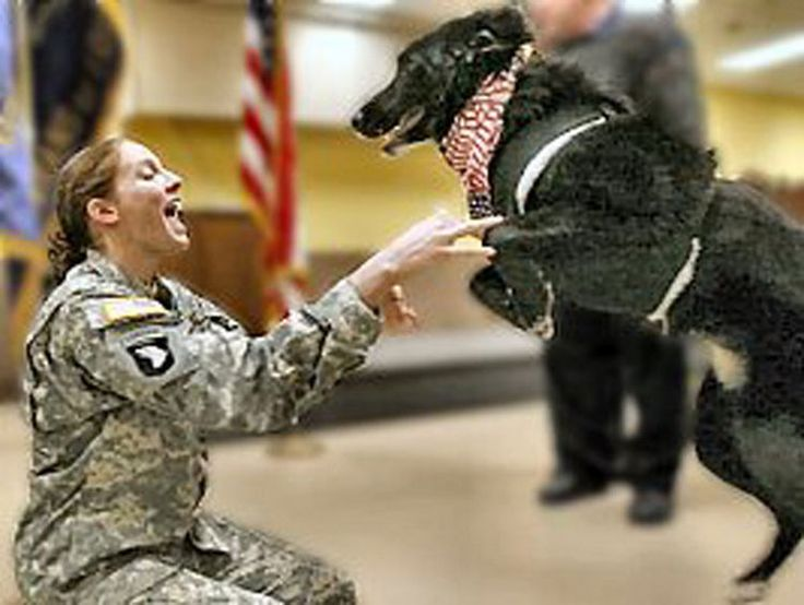 15 Emotional Photos of Soldiers Coming Home - Her dog is jumping for joy and so happy to see his mommy again.