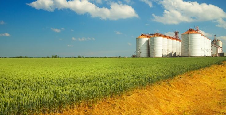 Insurance Basics: How Crop Insurance Stacks Up to Other Insurance Products