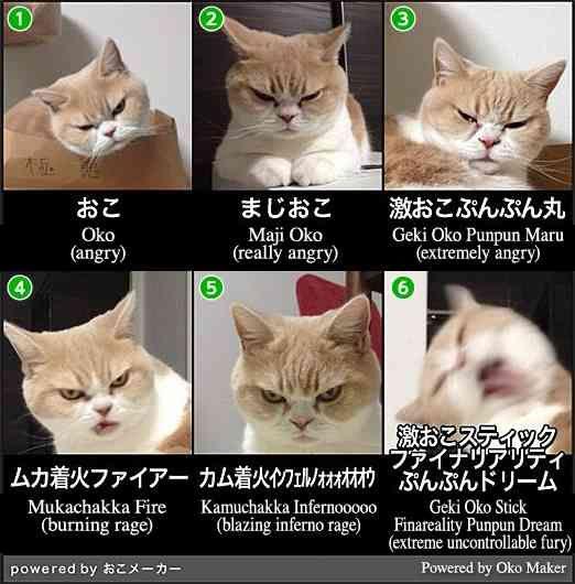 おこ→まじおこ→激おこぷんぷん丸→  がとてもよくわかる画像一覧www : 〓 ねこメモ 〓