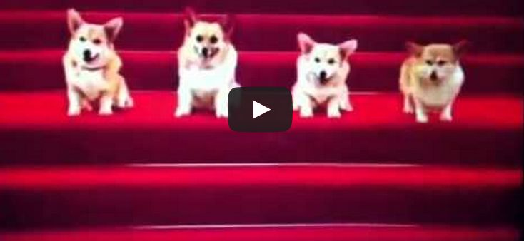 Dogs saying happy birthday song