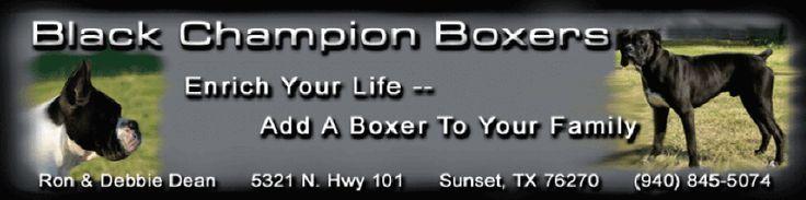 AKC Black Boxer Champion Boxer Puppy For Sale In Texas Boxer Breeder Black Boxer Puppy