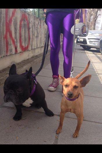 pcp purple shiny leggings