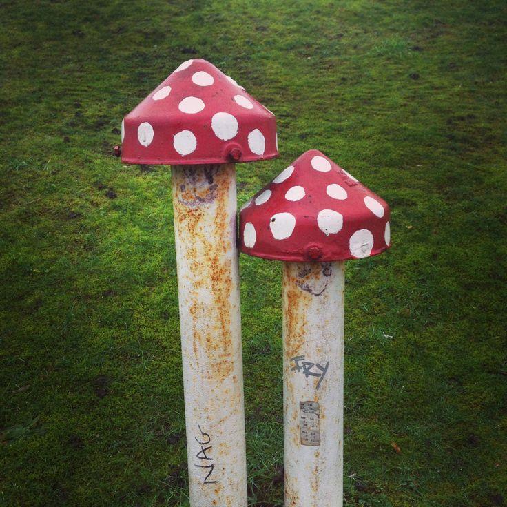 Portslade mushroom pipes