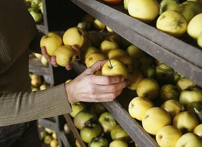 Stocker les fruits tout l'hiver