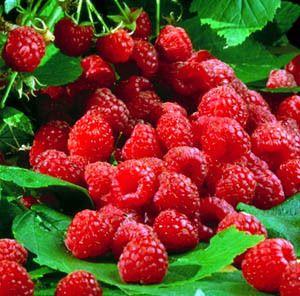 delicious raspberries. #bodycology