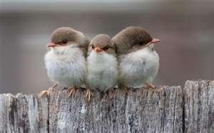 Three Small Birds