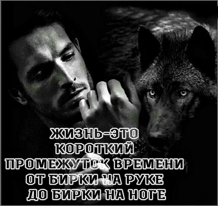 береза картинки волков с статусами смыслом мужские будет