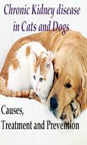 Kidney Disease In Cats And Dogs Pinterest Kidney Disease Cat