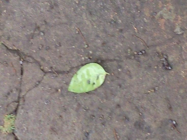 Quando cair a última folha no duro concreto, talvez abram-se crateras na consciência humana