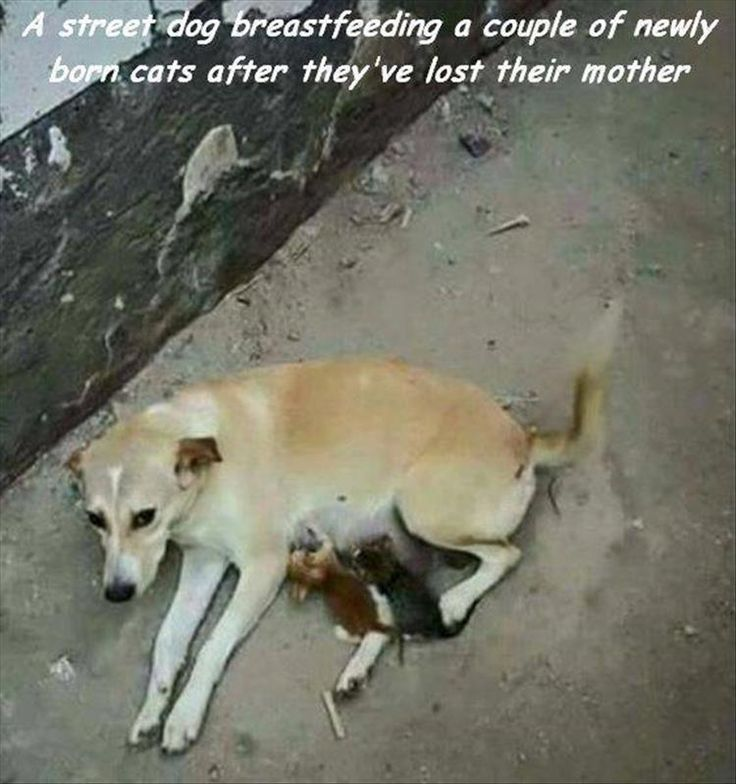 Morning Random Picture Dump 39 Pics