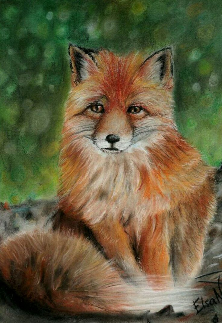 """Fox"" Pastel drawing by @elsa_creative on instagram"