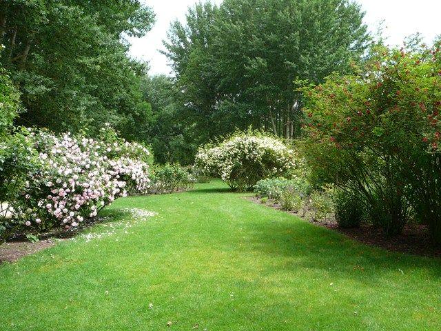 chemins_de_la_rose_007jpg Fleurs et jardins Pinterest