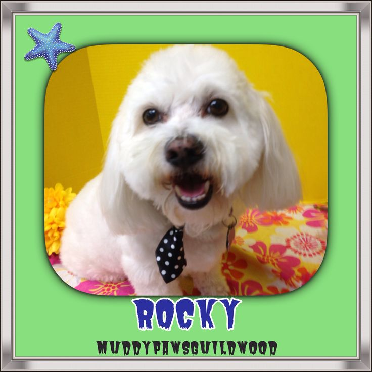 Say hello to Rocky.  He's a star.