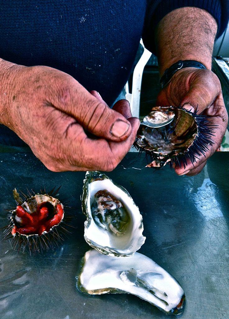 #sicily #fresh #RicciDiMare #oysters