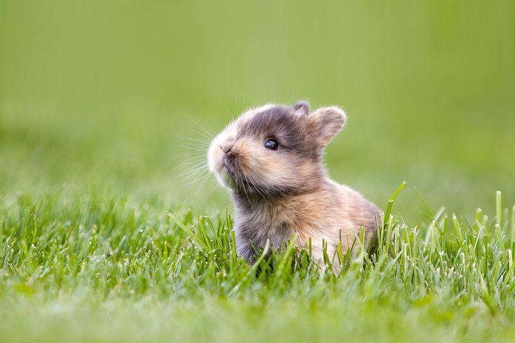 """""""Aaaaaaaaaaaw""""  Kaninchen - bunny  .  Animal Photography Artwork"""