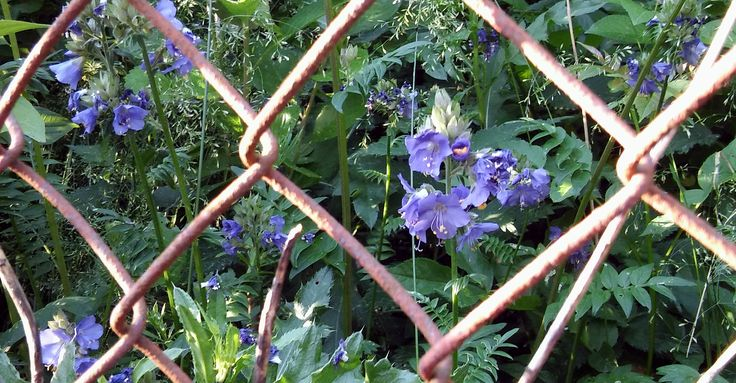 On the other side of the fence...