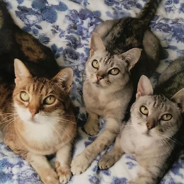 上を見る猫🐱 #愛猫家 #愛猫 #猫 #猫好き #オシキャット #五月梨世