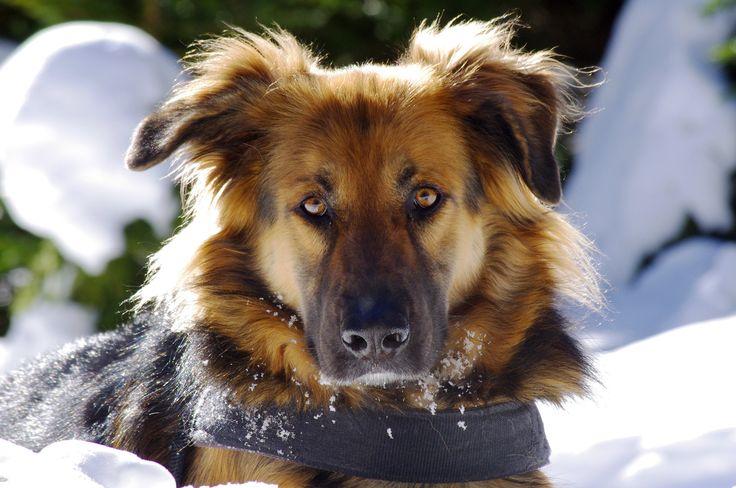 FIONA VON TRIPPS | Gli occhi del cane erano davvero belli, con le iridi color nocciola cosparse di pagliuzze dorate sulla cornea di un bianco caldo e pastoso. E il suo sguardo rivelava pensieri semplici e misteriosi, comuni alle bestie intelligenti e agli uomini semplici di questa terra (Anatole France).