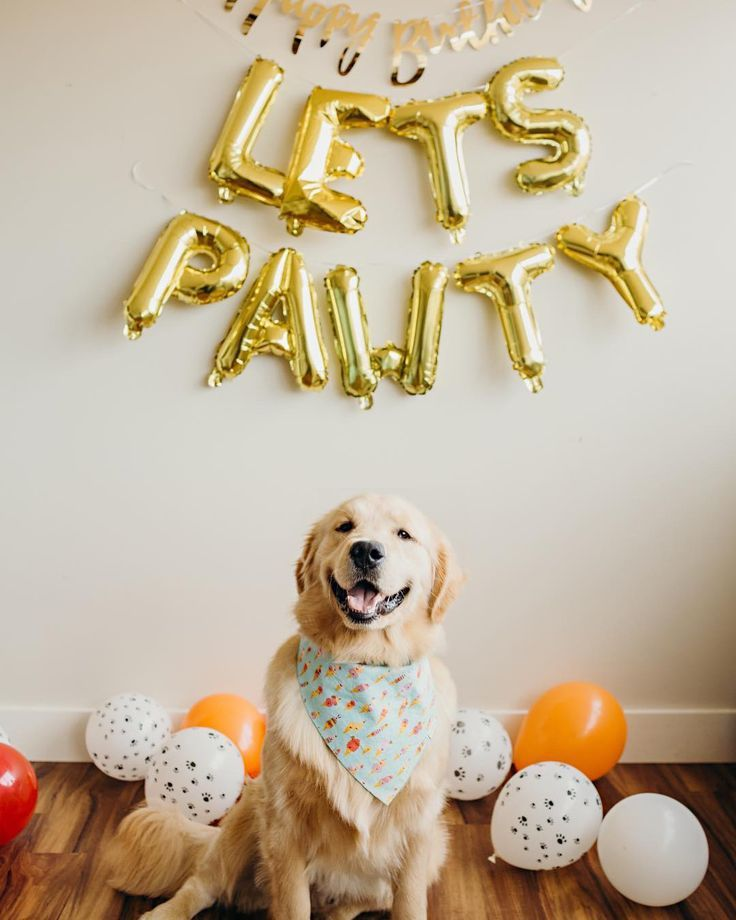 Lets Pawty Balloons Puppy Birthday Party Decoration Puppy Etsy