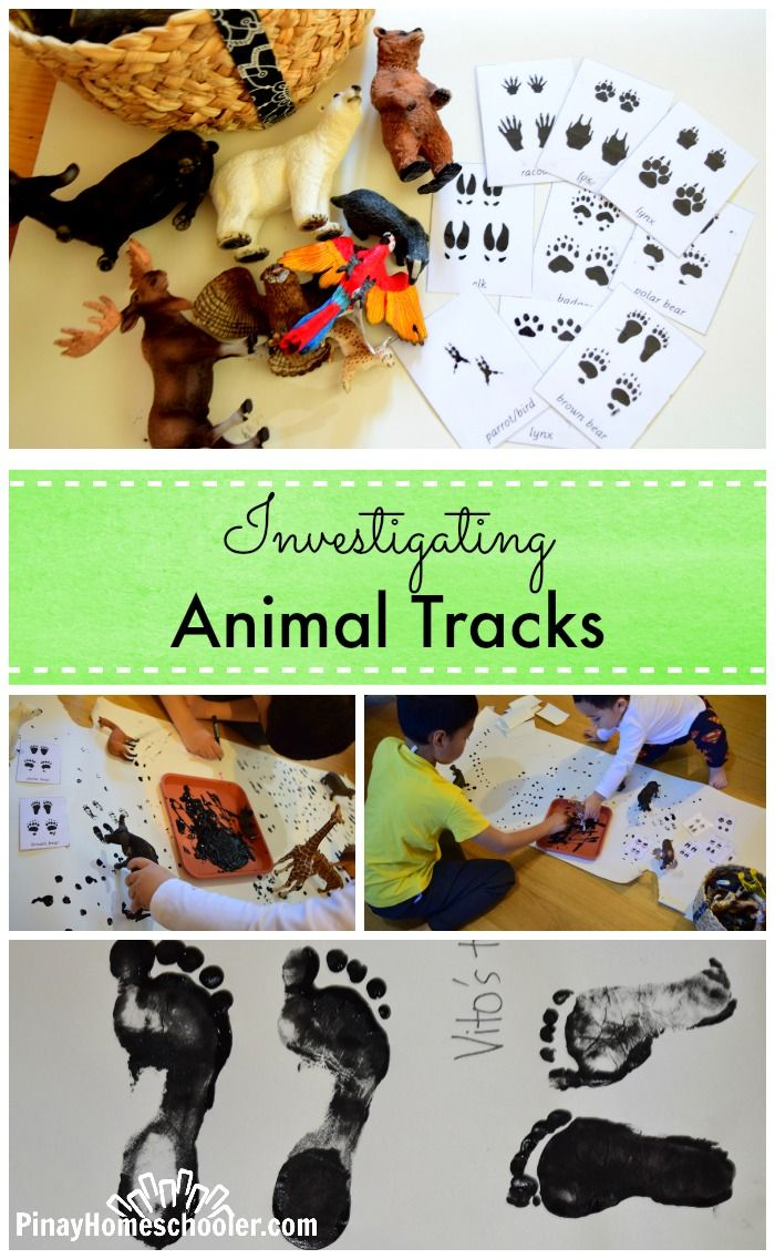 Bottle brush woodland animals - Investigating Animal Tracks