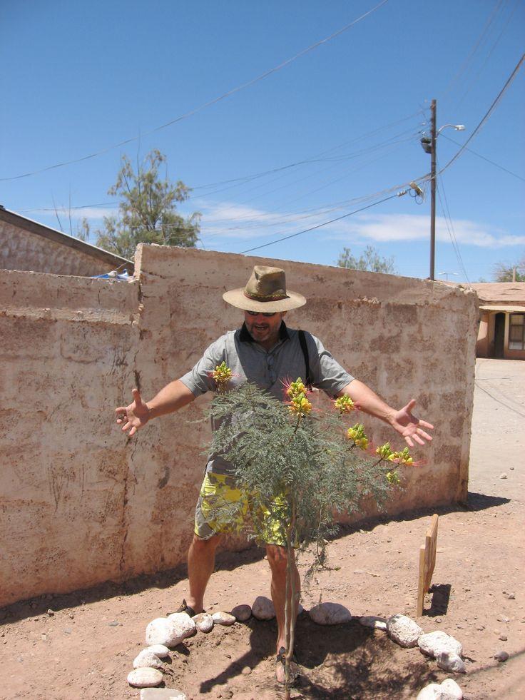 Hay que cuidar la Flor Interna con mucho amor, sino cualquiera que no registre el Amor Incondicional, te destruye...(Enero 2011)