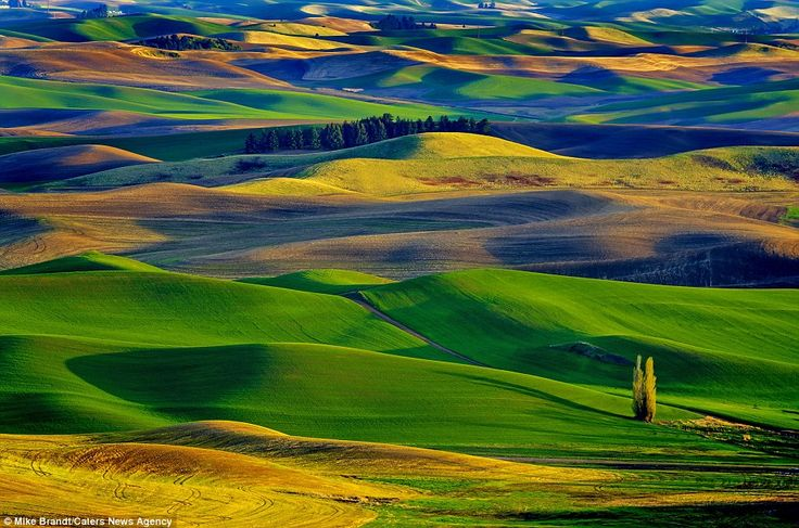 Real beauty: This incredible scene at the Palouse valley, Washington, USA, was caught on camera by amateur photographer Mike Brandt