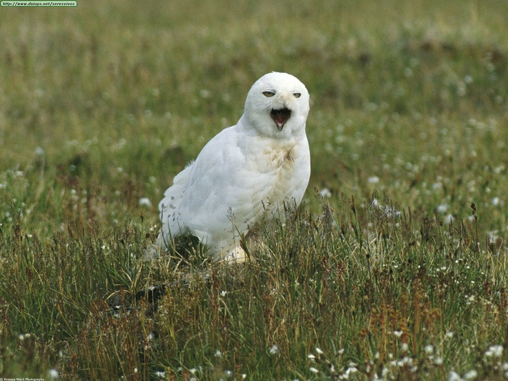 Owls are always relevant, as are cats.