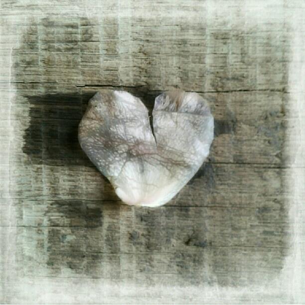 etwas zerknittert #petal #rose #heart #wood