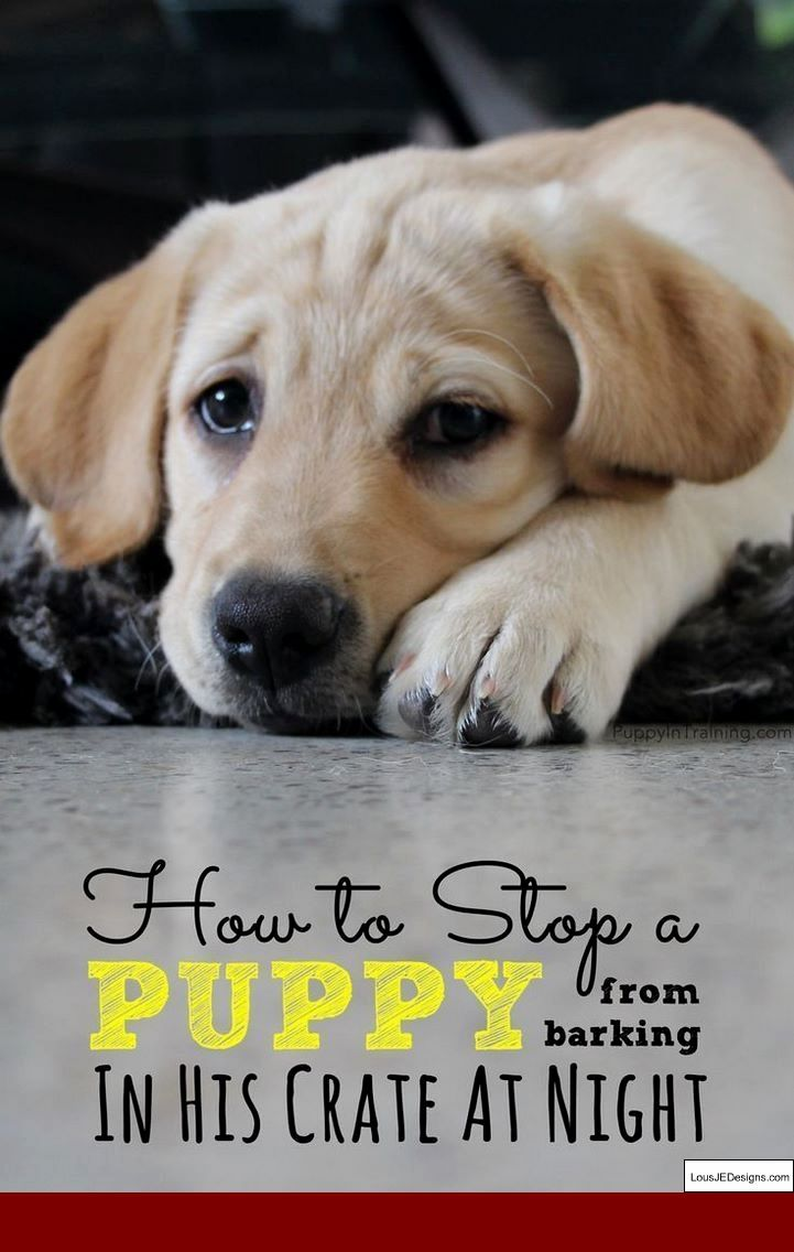 Puppy Training Tips For The First Week And Pics Of How To Toilet